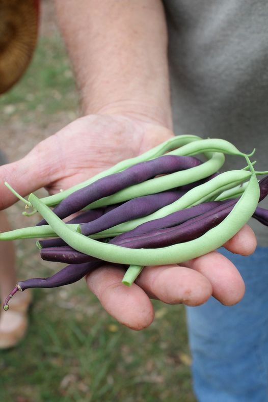 Gardening 101: (various herbs & veggies) | Event in Boerne | AllEvents.in