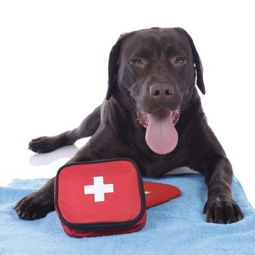 Canine First Aid Workshop (humans only)