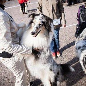 Koiranäyttely Lahti