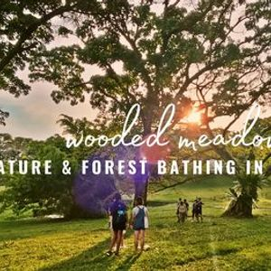 Nature and Forest Bathing in the CityWooded Meadow