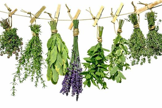 Healing Magic with Herbs