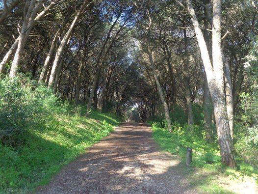 Caminhada por Trilhos e Miradouros de Monsanto - 11kms, 2 April | Event in Queluz | AllEvents.in