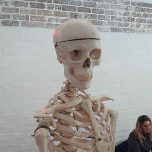 Introduction to Anatomy Workshop