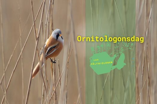 Ornitologonsdag, 21 April | Event in Lund | AllEvents.in