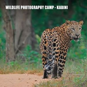 Wildlife Photography Camp - Kabini November 2019