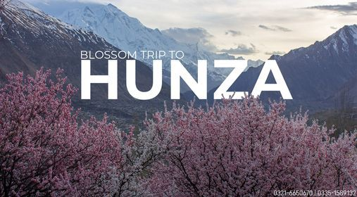 Cherry Blossom trip to Hunza, 3 April | Event in Islamabad | AllEvents.in