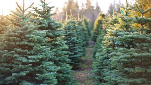 Christmas Tree Farm Arizona.Christmas Tree Farm Mini Sessions At Discount Trees Mason