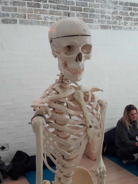 Introduction to Anatomy Workshop, 16 July | Event in Constantia | AllEvents.in