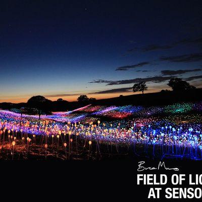 Bruce Munro Field of Light at Sensorio Thursday FAMILY NIGHT Dec 24th