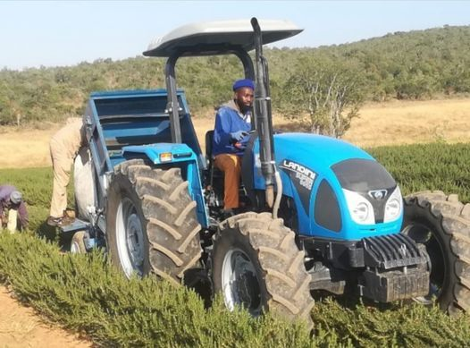 Emerging Farmers and Agro Processing Conference 2020, 26 November | Event in Pretoria | AllEvents.in