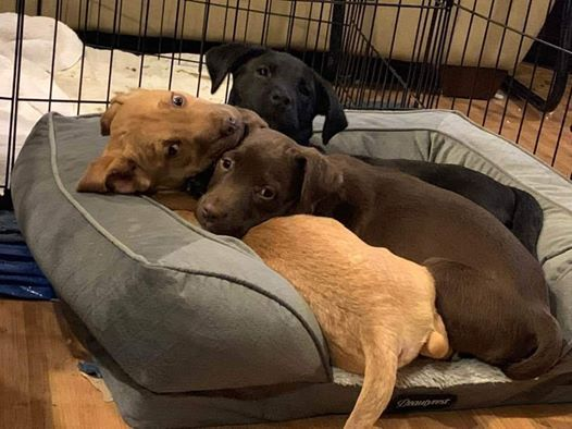 Furry Tails Canine Adoption Event At Petco Colorado Springs W Colorado Springs