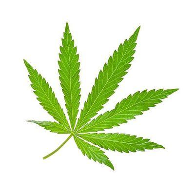 Medical Marijuana Doctor Certification- Medical Marijuana Card