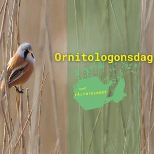 Ornitologonsdag