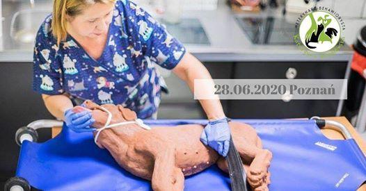 Pierwsza pomoc przedweterynaryjna i opieka nad chorymi.