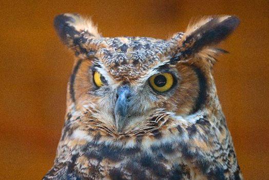 Rowe Adventures Owl Prowl