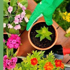Biohortas e Jardins em varandas e terraos