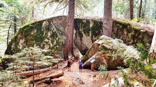 Soul Adventure Old Growth Cedars