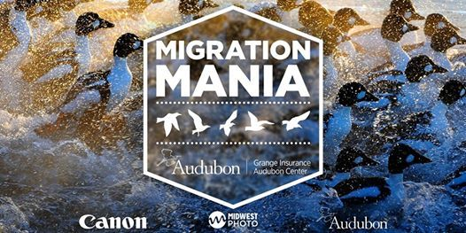 Migration Mania