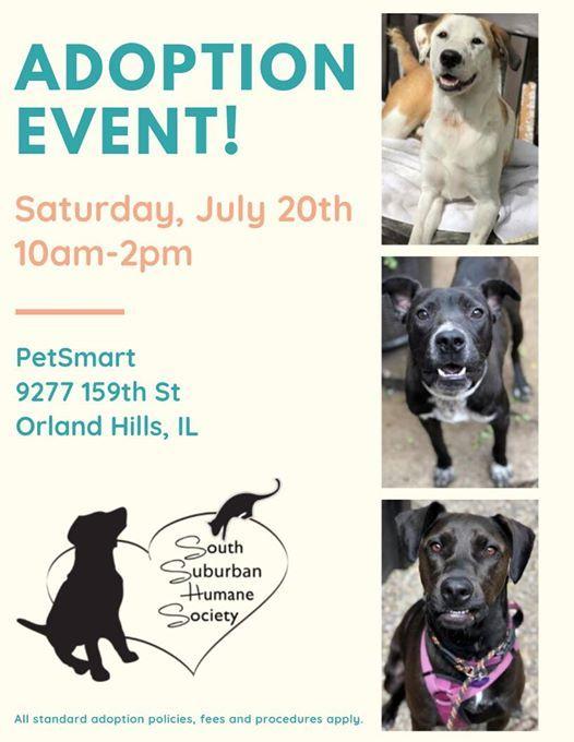 Adoption Event at Petsmart Orland Hills, IL, Orland Park