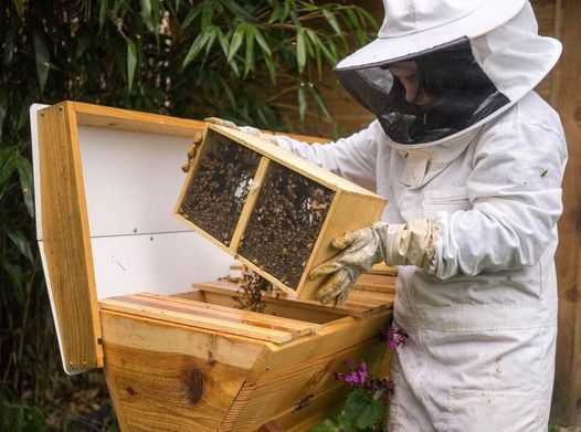 What is Apiculture?