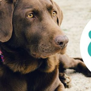 Dog First Aid Training - Chesterfield