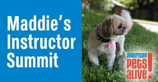 Maddie's Instructor Summit, 20 January | Online Event | AllEvents.in
