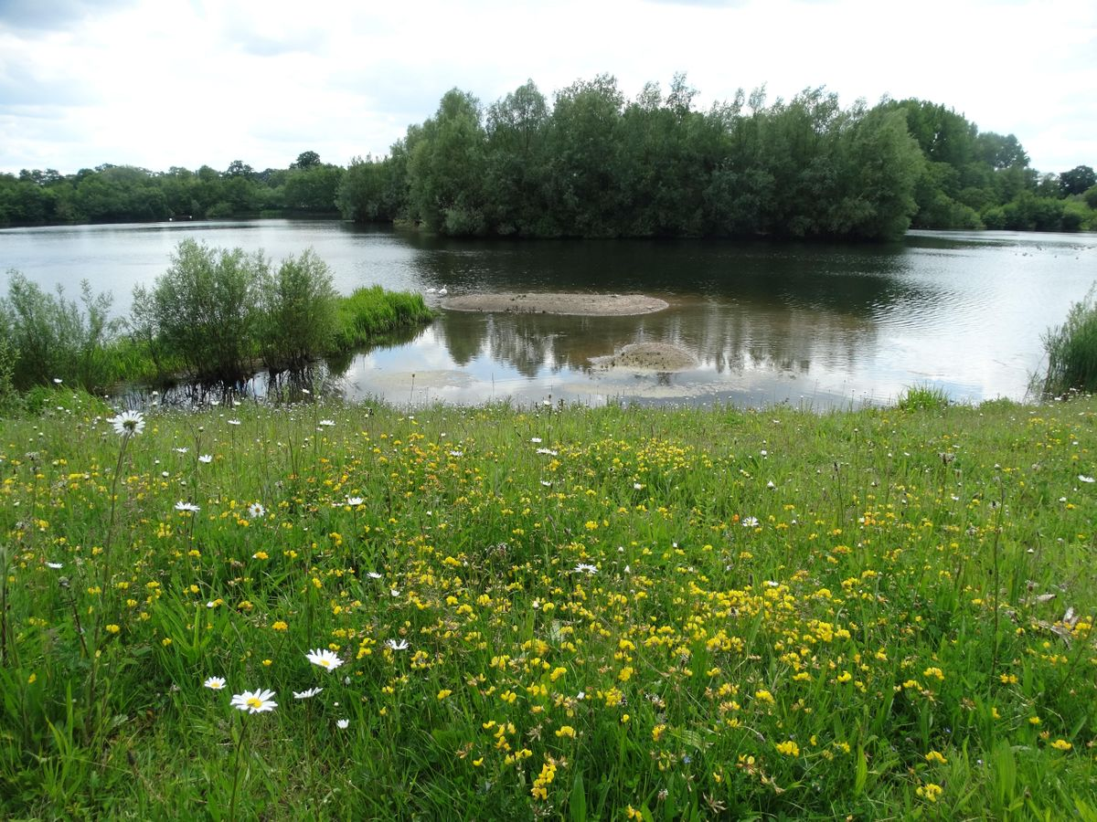Explore Bodenham Lake Nature Reserve, 14 August | Event in Hereford | AllEvents.in
