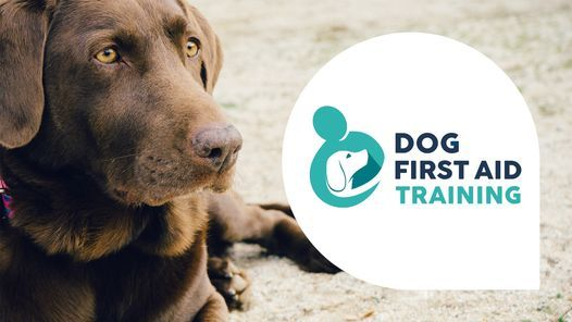 Dog First Aid Training - Chesterfield, 10 July | Event in Chesterfield | AllEvents.in