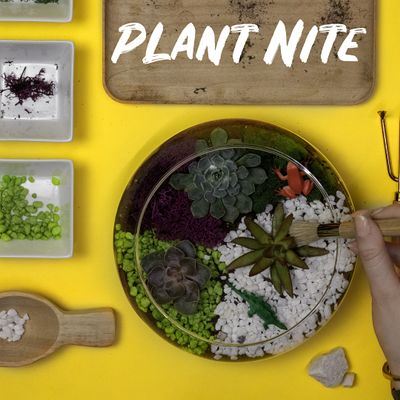 Virtual Family Plant Party Make a Succulent Terrarium