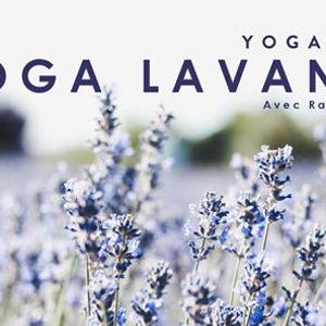 Yoga Lavande & Pique-Nique