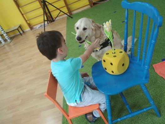 Teoretyczny Kurs Podstawy Dogoterapii