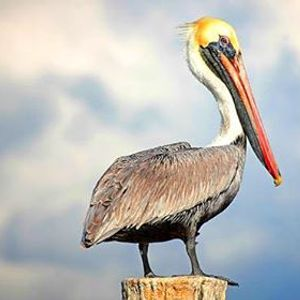 Pelican Harbor Seabird Station Tour