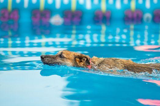 K9 Manners & More Annual Dog Daze of Summer, 3 September | Event in Broken Arrow | AllEvents.in