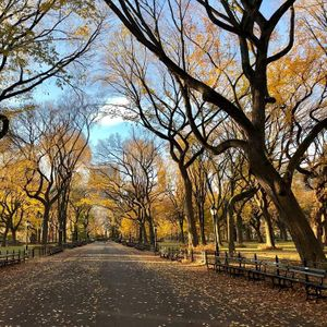 Under 15 - Central Park Guided Tour
