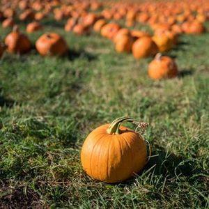 Central Park Pumpkin Scavenger Hunt