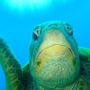 Double Dive - Flinders Reef - 20th December 2020