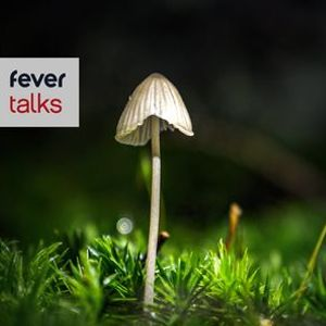 Can Magic Mushrooms Heal Depression - London