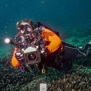 Double Dive - Flinders Reef - 22nd November 2020