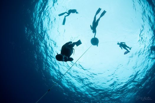 Become a Freediver, Sydney | Event in Alexandria | AllEvents.in