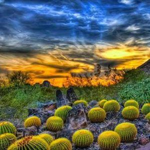 Free Days - Desert Botanical Garden