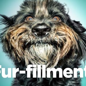 Dog Lovers Show - Sydney 2022