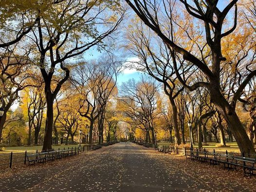 Under $15 - Central Park Guided Tour, 15 February   Event in York   AllEvents.in