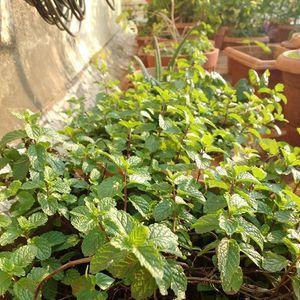 Online Organic kitchen gardening