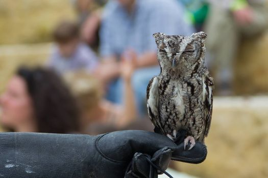 Owl Prowl Night Hike, 6 March | Event in McKinney | AllEvents.in