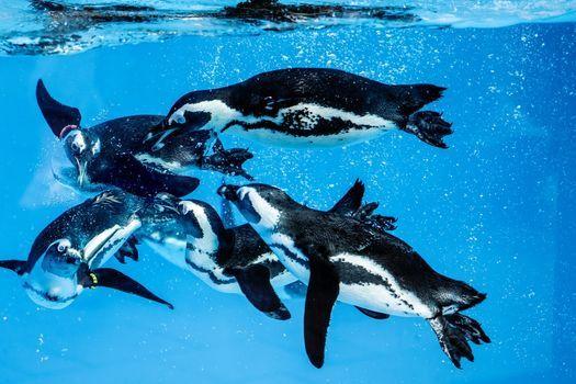 Pápaszemes pingvinek látványetetése a győri állatkertben | Event in Gyor | AllEvents.in